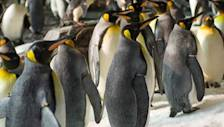 SeaWorld: Penguins Are Coolest Thing in Florida