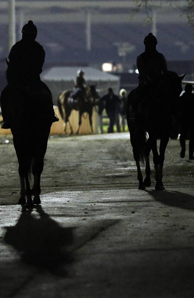 Horses make their way to the track for morning workouts at Churchill Downs Tuesday, April 29, 2014, in Louisville, Ky
