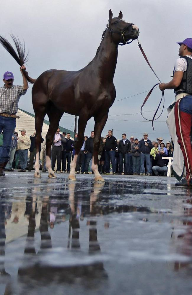 Kentucky Derby hopeful California Chrome gets a bath after a morning workout at Churchill Downs Wednesday, April 30, 2014, in Louisville, Ky