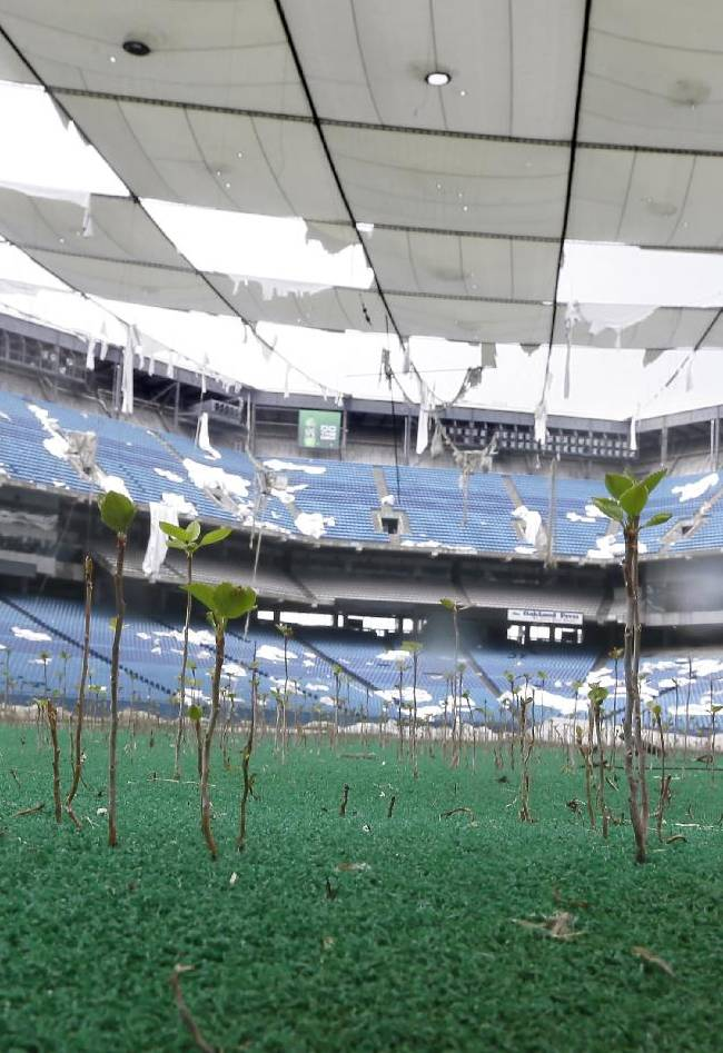In this Monday, May 12, 2014 photo, tree seedlings grow on the turf of the Pontiac Silverdome in Pontiac, Mich. The 80,000-seat indoor stadium hosted the Super Bowl, the NBA finals, the World Cup, Wrestlemania and concerts by Elvis Presley, Led Zeppelin and the Rolling Stones. Nowadays, the venue is a shell of its former self with its roof in tatters and a lack of electrical power that has left the stadium's innards dark and mold-covered. The Silverdome's current owner is determined to cash in before it's too late, putting everything inside up for auction starting on Wednesday, May 21