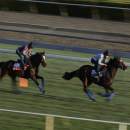 Telescope, right, and Dank, with exercise riders up, train for the Breeders' Cup races at Santa Anita Park Wednesday, Oct. 29, 2014, in Arcadia, Calif. (AP Photo/Jae C. Hong)