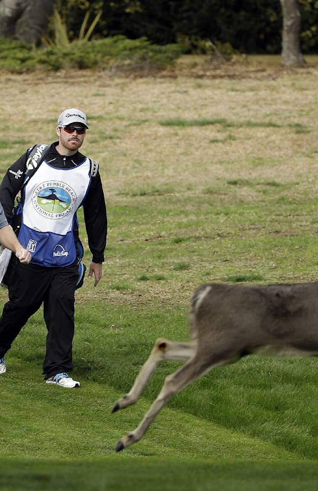 Troy Matteson, left, walks down to the third green of the Monterey Peninsula Country Club Shore Course as a buck runs out of the way during the first round of the AT&T Pebble Beach Pro-Am golf tournament on Thursday, Feb. 6, 2014, in Pebble Beach, Calif