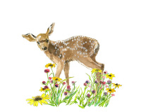 Fawn Flowers-11x14