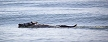 Spooked horse jumps into the Pacific Ocean (April Visel/KSBW)