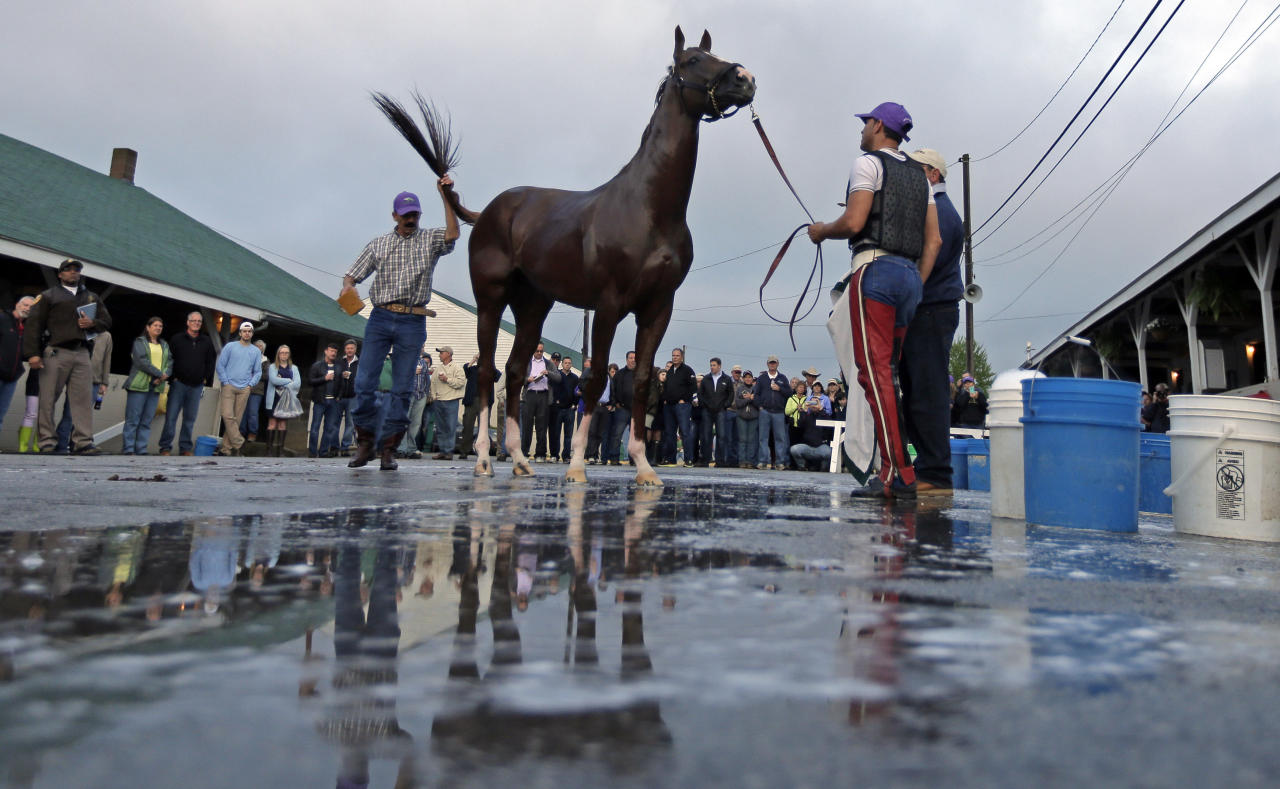 Kentucky Derby hopeful California Chrome gets a bath after a morning workout at Churchill Downs Wednesday, April 30, 2014, in Louisville, Ky. (AP Photo/Charlie Riedel)