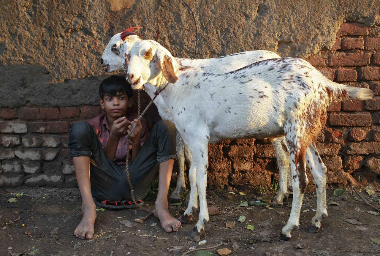 A boy sells a pair of goats at a livestock market on the eve of the Eid al-Adha festival in the old quarters of Delhi October 15, 2013. Muslims around the world celebrate Eid al-Adha by the sacrificial killing of sheep, goats, cows and camels to commemorate Prophet Abraham's willingness to sacrifice his son Ismail on God's command. REUTERS/Anindito Mukherjee (INDIA)