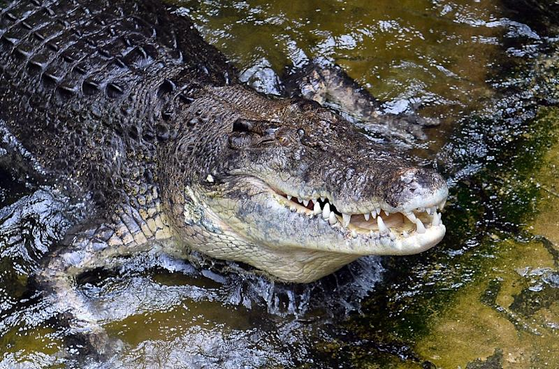 Reported crocodile attack near Proserpine leaves man seriously injured