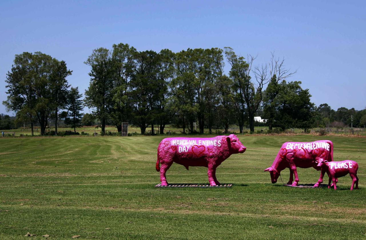 "Sculptures in the shape of cows with the words ""Happy Valentine's Day"" and ""Be my Valentine, please"" painted on their sides, are pictured at a paddock on the outskirts of the town of Nowra, located 150 km (93 miles) south of Sydney February 10, 2013. Valentine's Day is celebrated on February 14. Picture taken February 10.  REUTERS/David Gray (AUSTRALIA - Tags: SOCIETY)"