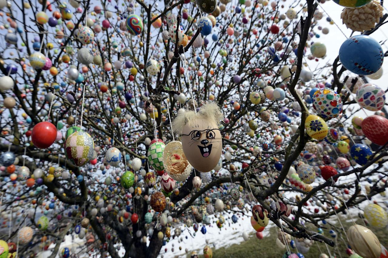 SAALFELD, GERMANY - MARCH 24:  Easter eggs hang in the apple tree, which pensioners Volker and Christa Kraft have decorated with 10.000 Easter eggs on March 24, 2013 in Saalfeld, Germany. The family started decorating an apple tree with painted hen's eggs in their garden in 1965 as amusement for child and grandchildren, now it is an attraction that draws thousands of visitors and tourists to the garden of the family. (Photo by Thomas Lohnes/Getty Images)