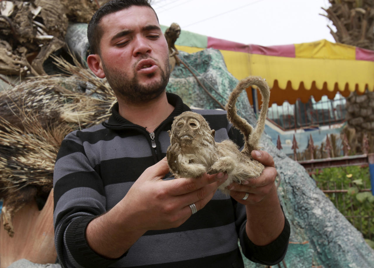 In this photo taken Wednesday, April 18, 2012 Palestinian zoo owner Mohammed Awaida holds a mummified monkey at the Khan Younis zoo, southern Gaza Strip. There is an afterlife for animals at Gaza's Khan Younis zoo. Animals who die in the dilapidated park come to life again as stuffed creatures. But because the taxidermy in the impoverished Palestinian territory relies on techniques available on the Internet, the unusual wildlife experience of petting a lion, tiger or crocodile can be a grim one.(AP Photo/Adel Hana)