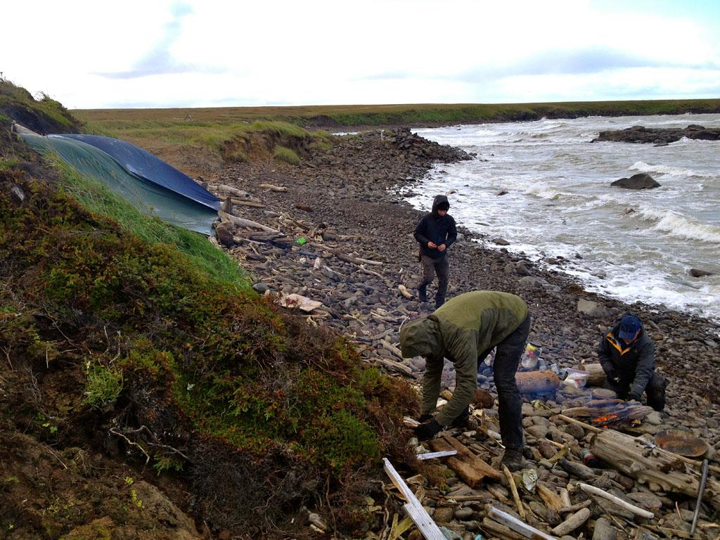 Nunivak Island, Alaska, USA: Brent Sass, Tyrell Seavey & Tyler Johnson collecting wood on the beach.