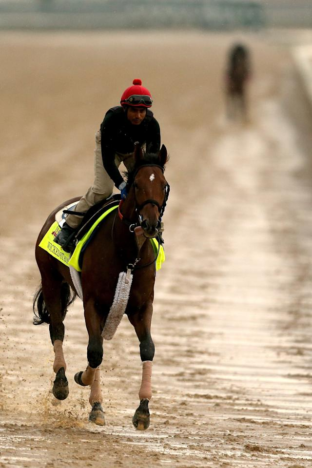 LOUISVILLE, KY - APRIL 28: Wicked Strong is riden by Kelvin Vahal during the morning exercise session in preparation for the140th Kentucky Derby at Churchill Downs on April 28, 2014 in Louisville, Kentucky. (Photo by Matthew Stockman/Getty Images)