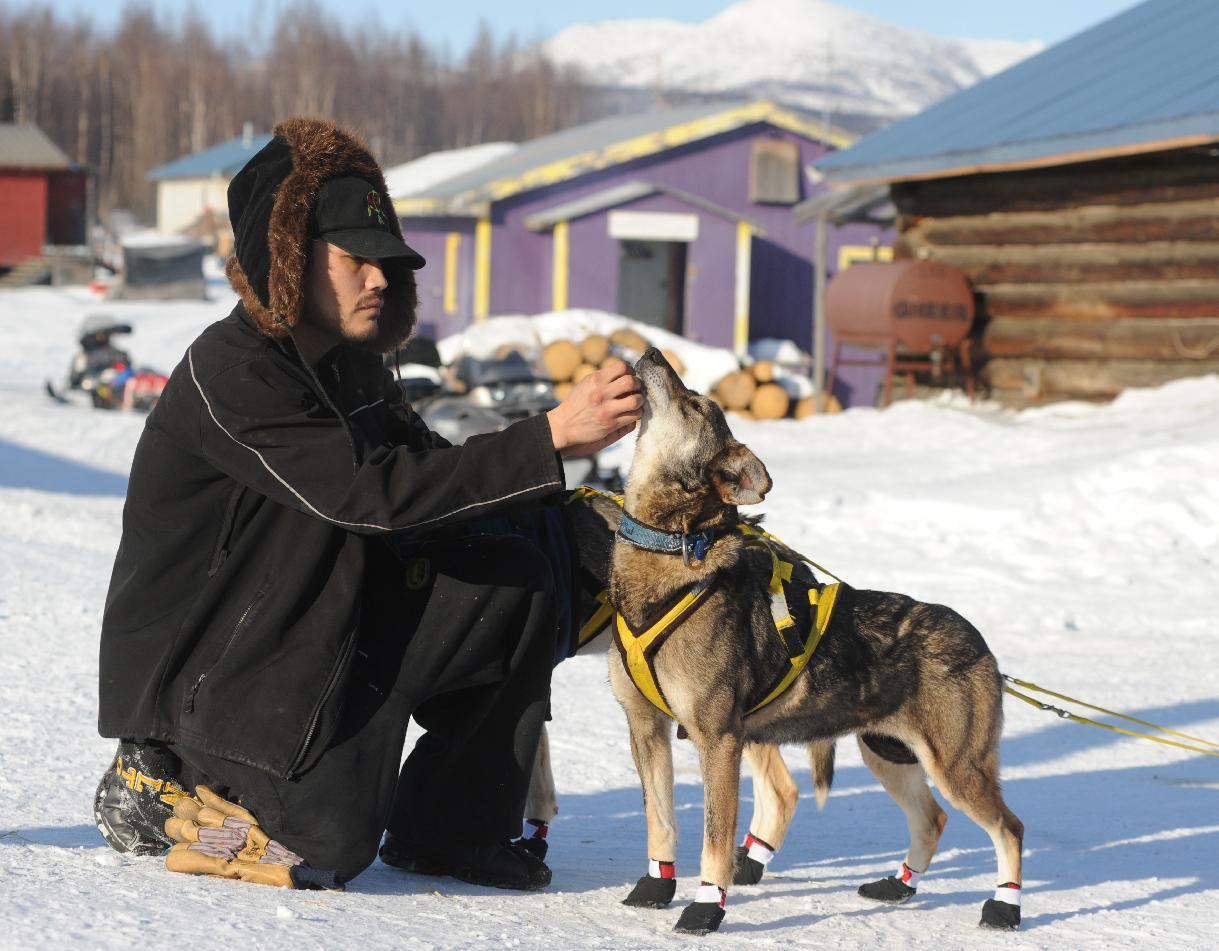 Frederick Huntington visits with one of Hans Gatt's dogs after he arrived into the Yukon River village of Kaltag during the 2014 Iditarod Trail Sled Dog Race on Saturday, March 8, 2014. (AP Photo/The Anchorage Daily News, Bob Hallinen)