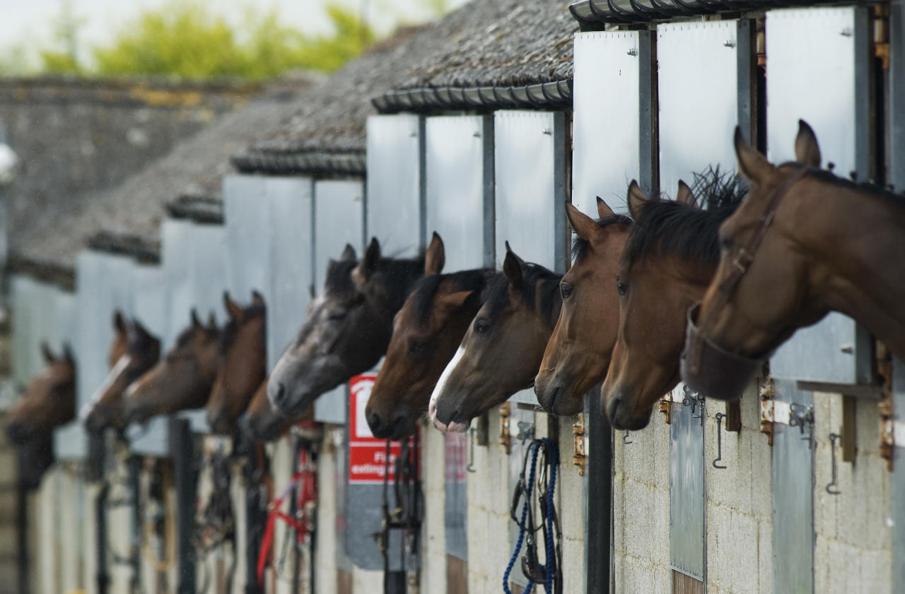 SALISBURY, ENGLAND - JUNE 07: Runners wait in the stables before going to the parade ring at Salisbury racecourse on June 07, 2011 in Salisbury, England.  (Photo by Alan Crowhurst/ Getty Images)