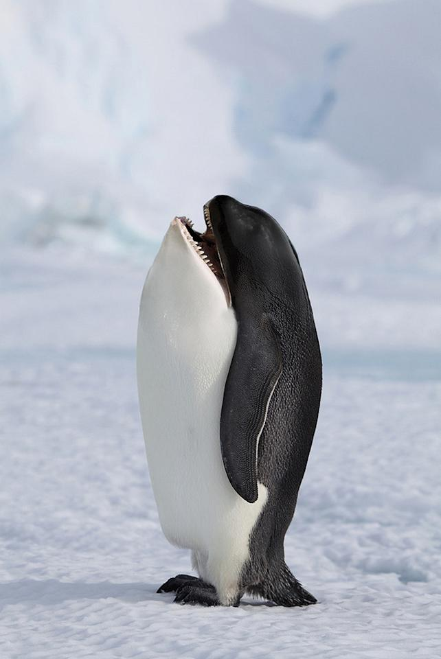 "The Killer Penguin. <a target=""_blank"" href=""http://i.imgur.com/5Z4Z5m5.jpg"">Photo</a> created by <a href=""http://www.reddit.com/user/gyyp"">gyyp.</a>"