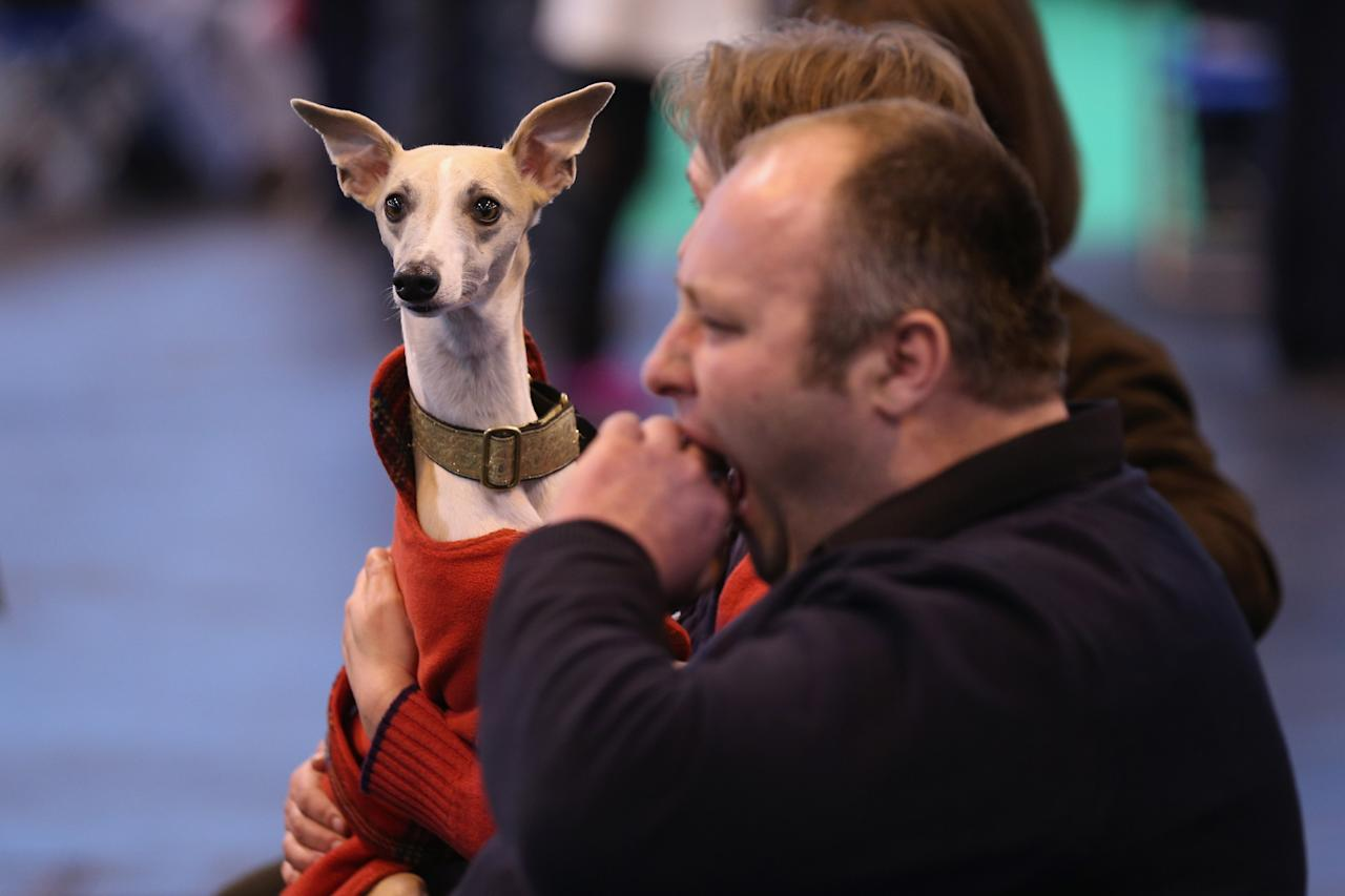 BIRMINGHAM, ENGLAND - MARCH 07:  Owners watch dogs being shown on the first day of Crufts dog show at the NEC on March 7, 2013 in Birmingham, England. The four-day show features over 25,000 dogs, with competitors travelling from 41 countries to take part. Crufts, which was first held in1891, sees thousands of dogs vie for the coveted title of 'Best in Show'.  (Photo by Oli Scarff/Getty Images)