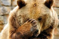 'Bear Market Checklist' Goes a Perfect 0-for-6