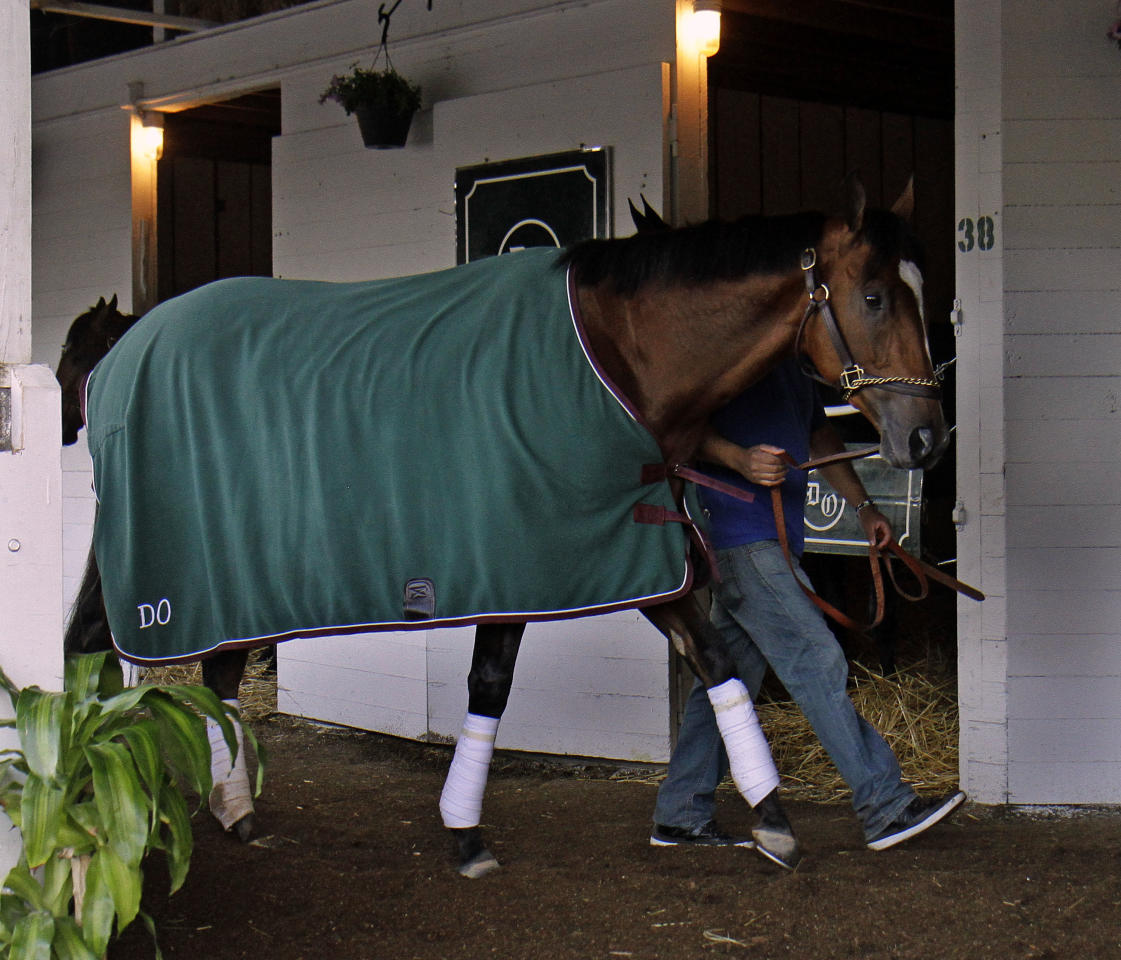 Kentucky Derby hopeful Goldencents walks the shed row after making his first trip to the track for a walk at Churchill Downs, Sunday, April 28, 2013, in Louisville, Ky. (AP Photo/Garry Jones)