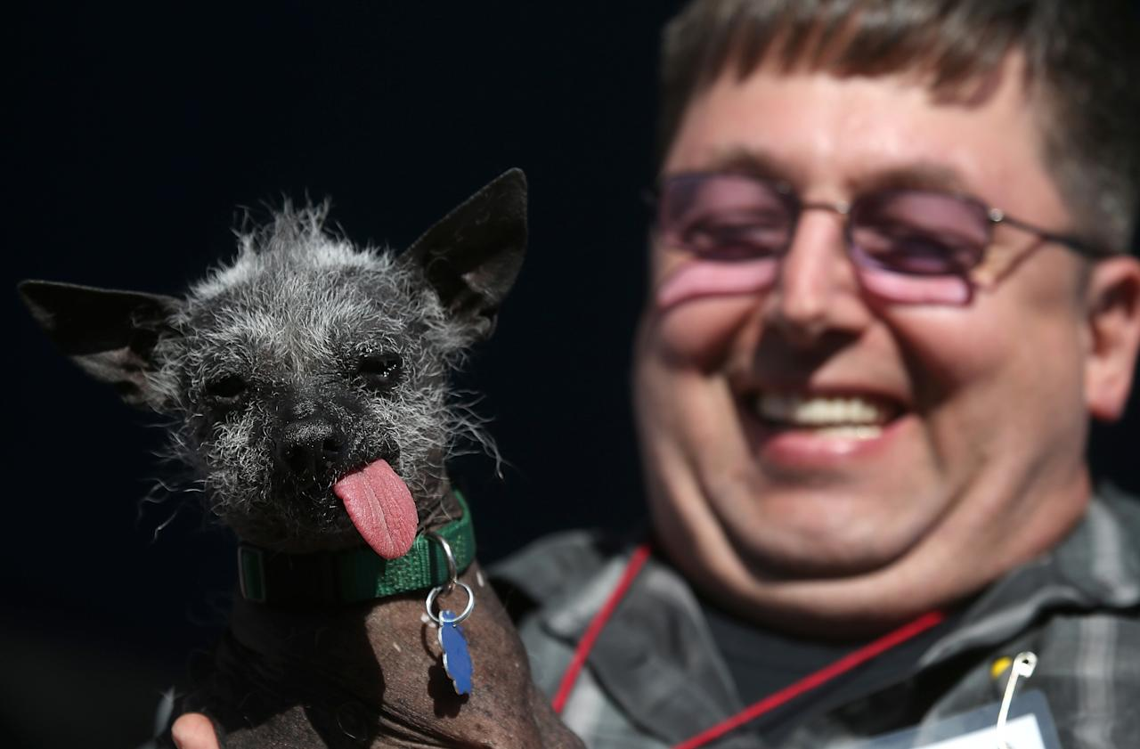 PETALUMA, CA - JUNE 21: Ty Oppelt holds his dog Ellie Mae, a Chinese Crested, during the 25th annual World's Ugliest Dog contest at the Sonoma Marin Fair on June 21, 2013 in Petaluma, California. Walle, a basset and beagle mix won the honor of being the world's ugliest dog. (Photo by Justin Sullivan/Getty Images)