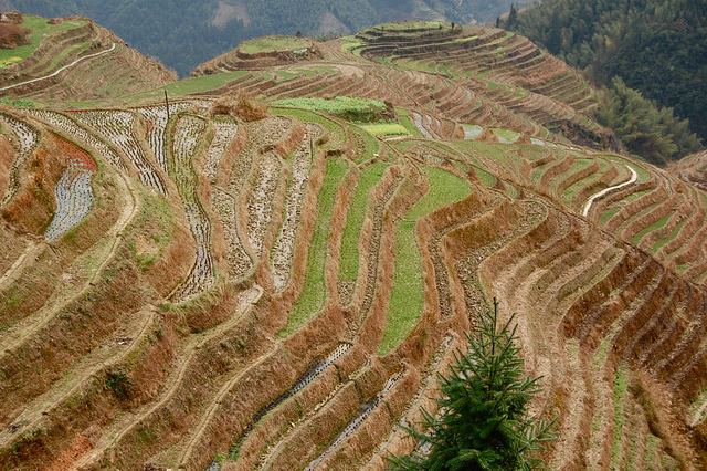 Mountain terraces in Guangxi province of China. Photo by mina / Flickr