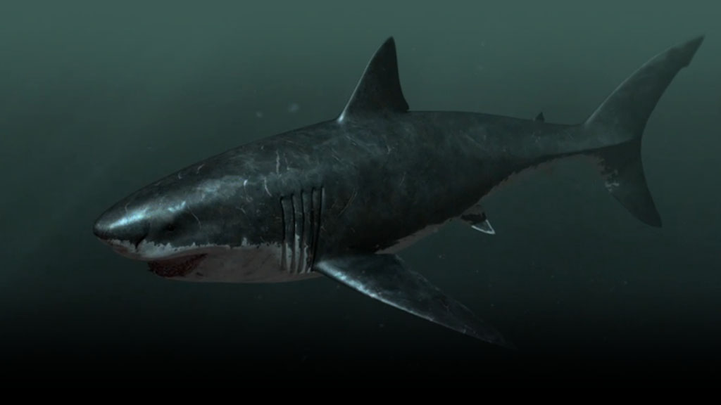 A rendering of the megalodon shark (Discovery).