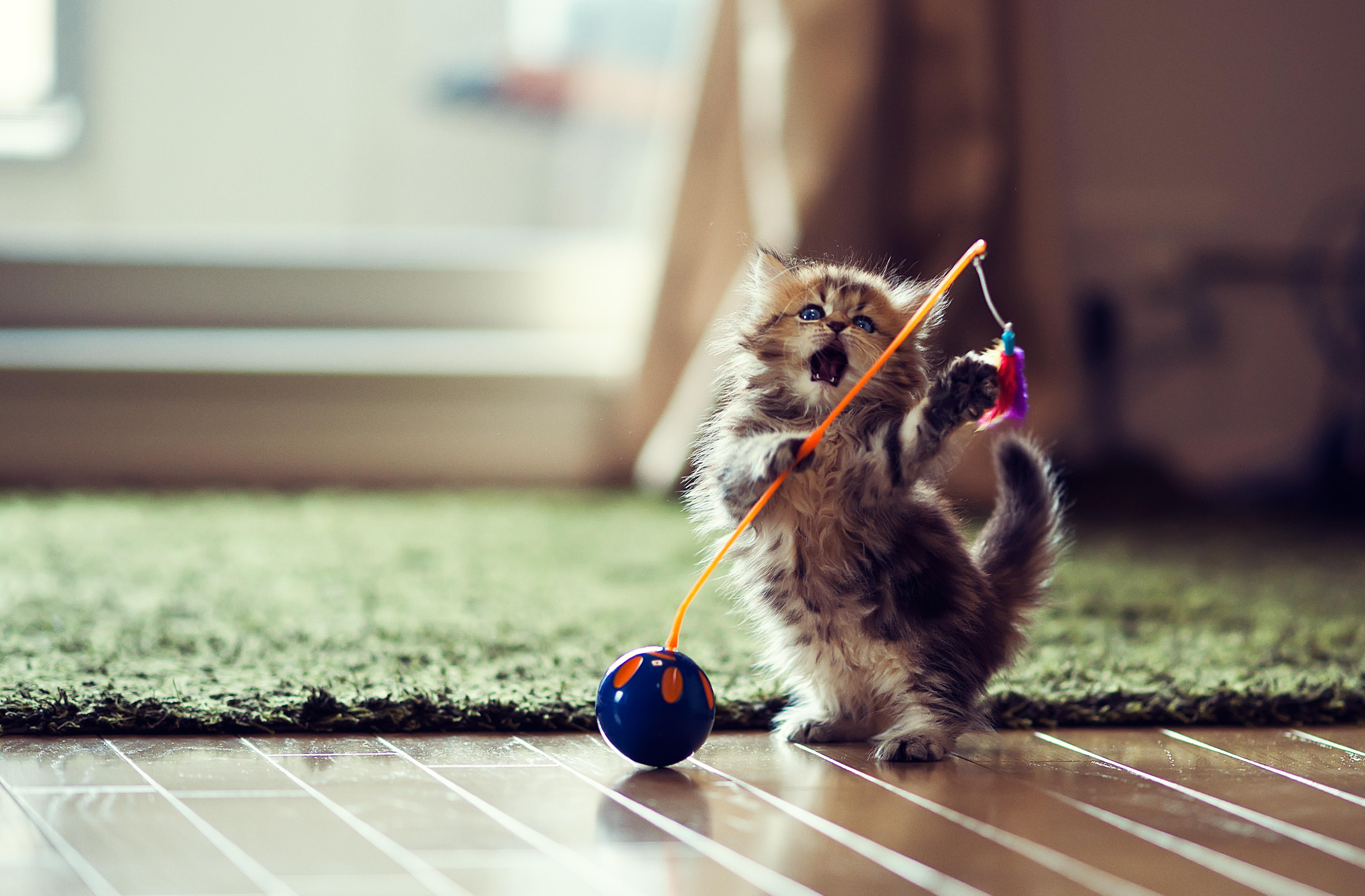 felix the cat public domain