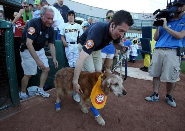 Trenton Thunder's bat dog retires following cancer diagnosis