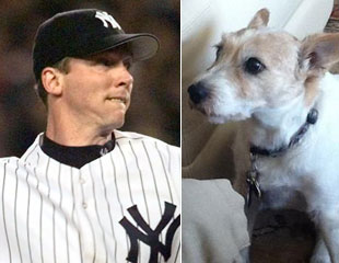 Famous Yankees dog dies at 16, played role in '98 season after …