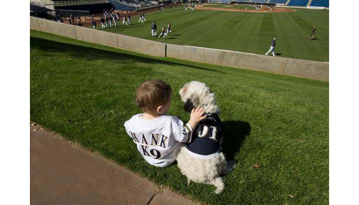Hank the Dog gets love from kid Brewers fan in personalized 'K9…