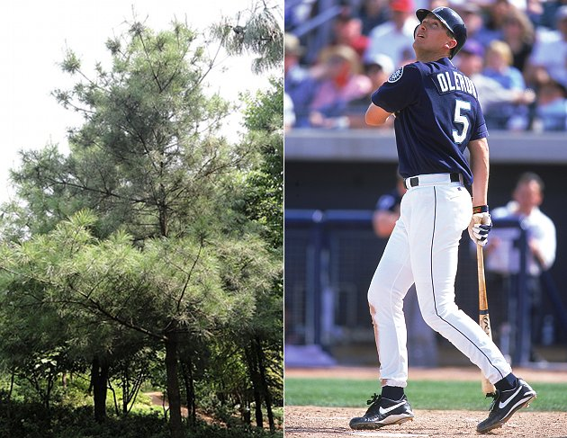 John Olerud wants neighbor to cut down tree blocking great view…