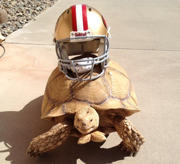 Colin Kaepernick has an enormous pet turtle