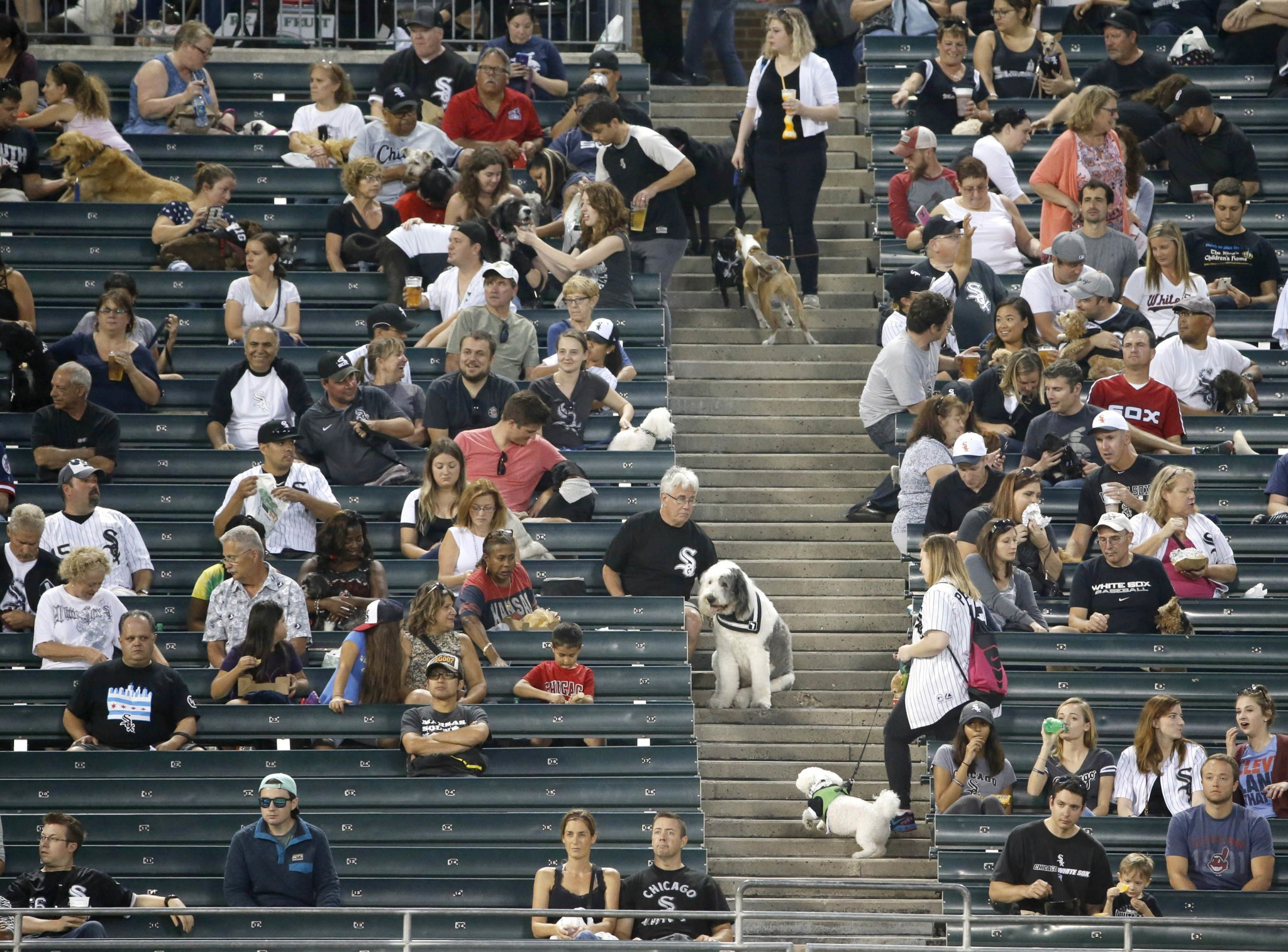 White Sox set world record as 1,122 dogs attend their game