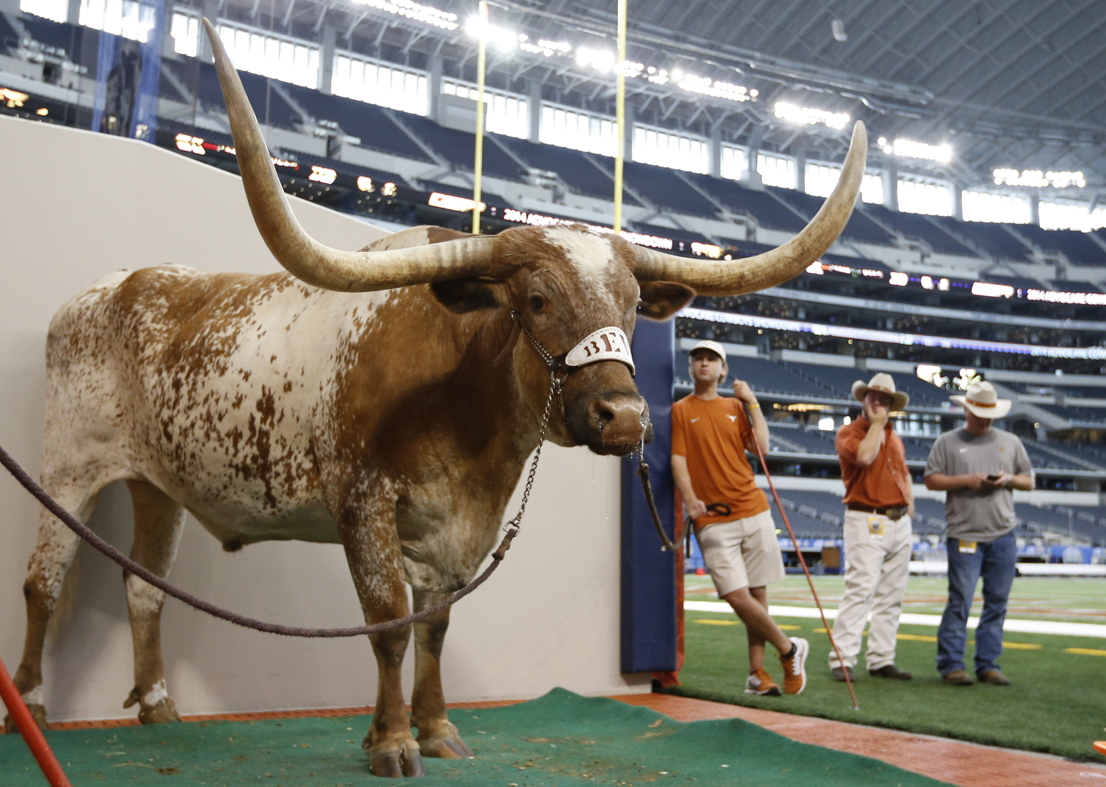 Sep 13, 2014; Arlington, TX, USA; Texas Longhorns mascot Bevo XIV prior to the game against the UCLA Bruins at AT&T Stadium. (Matthew Emmons-USA TODAY Sports)