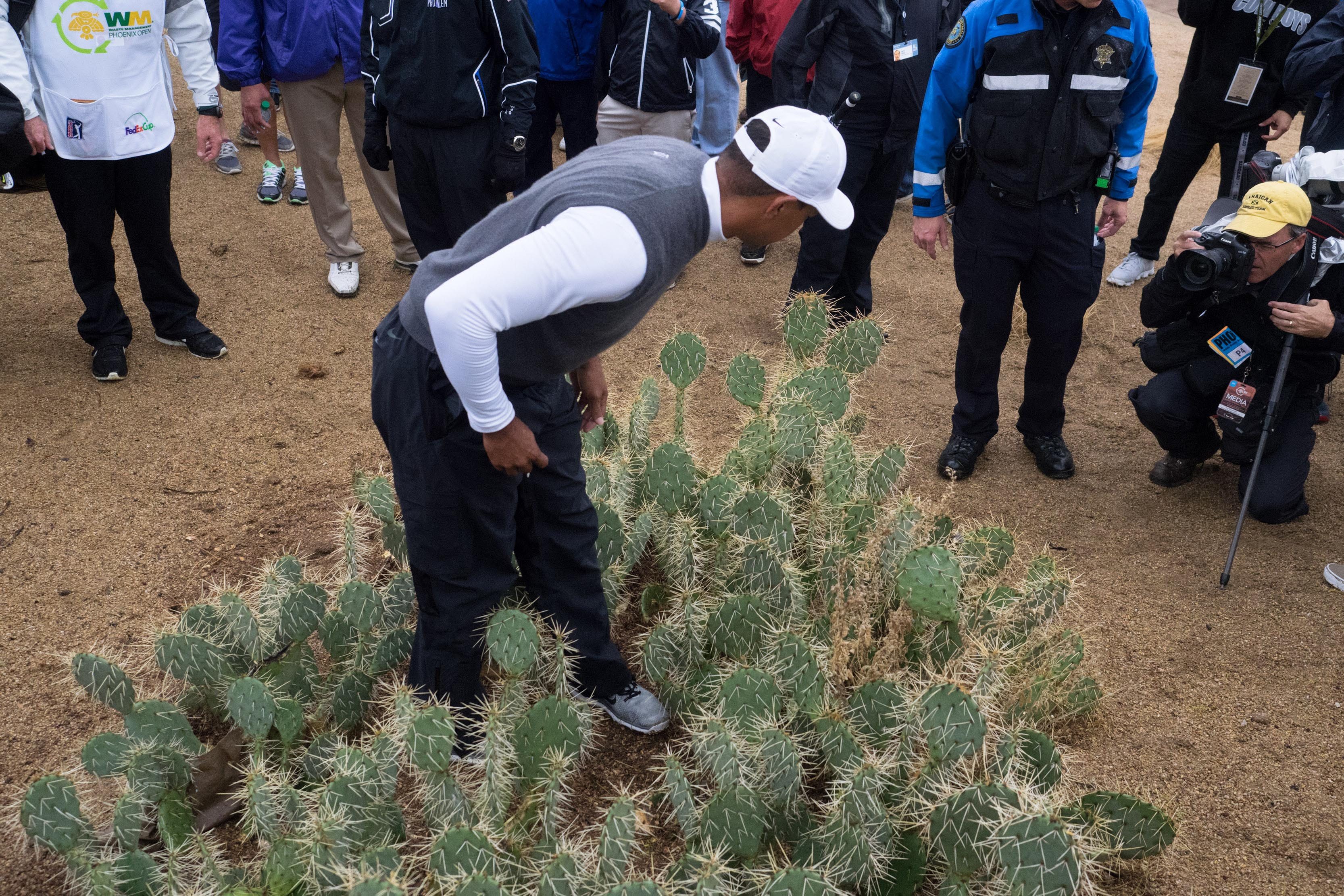Tiger Woods stands in a cactus while searching for his ball. (USAT)