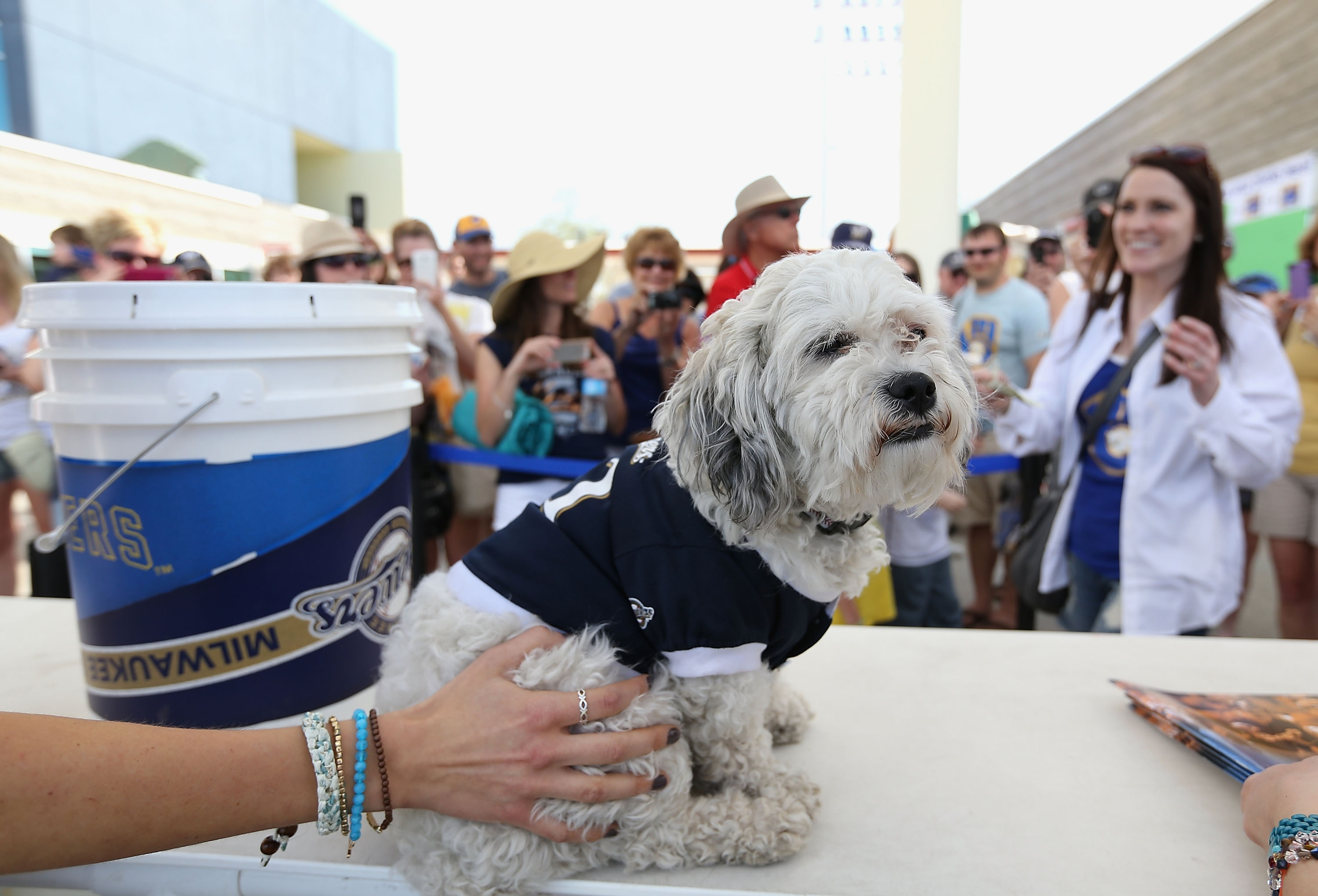 Hank the Dog gets his own Brewers bobblehead, to the surprise o…