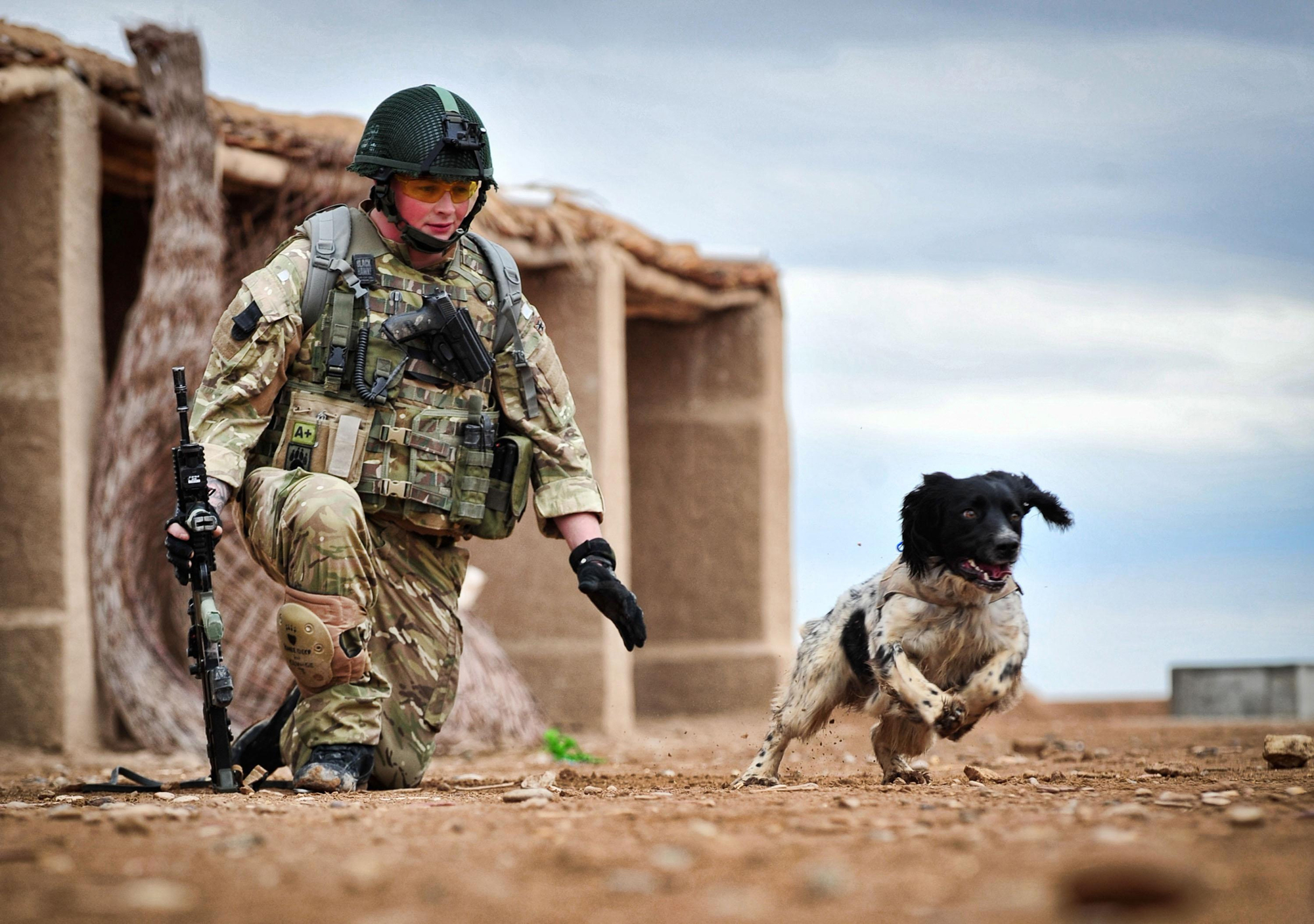 Liam Tasker, with his Military Working Dog, Theo, training in Camp Bastion.