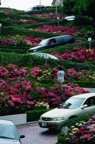 Cars, tourists and hydrangeas mix on Lombard, the world's crookedest street
