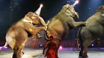 Elephants to disappear from Ringling Bros. circus