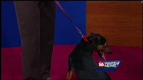 Pet of the Week: Penny