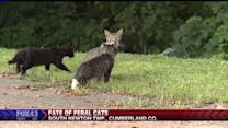 Plan to Trap, Euthanize Stray Cats Faces Backlash