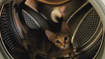 Cat Goes Running in a Washing Machine