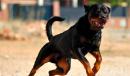 Donna trovata morta in Lomellina: forse è stata sbranata da due cani