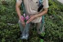 Wider Image: Taiwan plant hunters race to collect rare species before they're gone