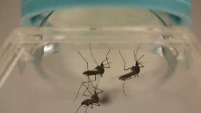Florida identifies two more Zika cases not related to travel