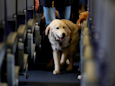 An emotional support dog bit a six-year-old girl on a Southwest Airlines flight — and some people are blaming the child (LUV)