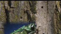 Emerald ash borer continues assault on Indiana's ash trees