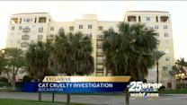 Woman calls roommate's abuse of cat 'sick'
