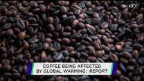 Too hot to handle:  Global warming hits coffee crop