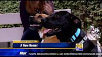 Superstorm Sandy dog finds a loving home for her last days