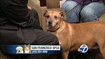 This week's perfect pet: Champ
